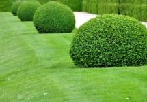 Baum- und Gehölzschnitt