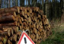Holzfällung