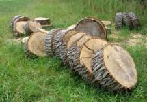 Baumscheiben